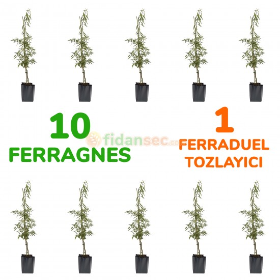 10 Adet Ferragnes 1 Adet Ferraduel Tozlayıcılı Badem Fidanı Paketi