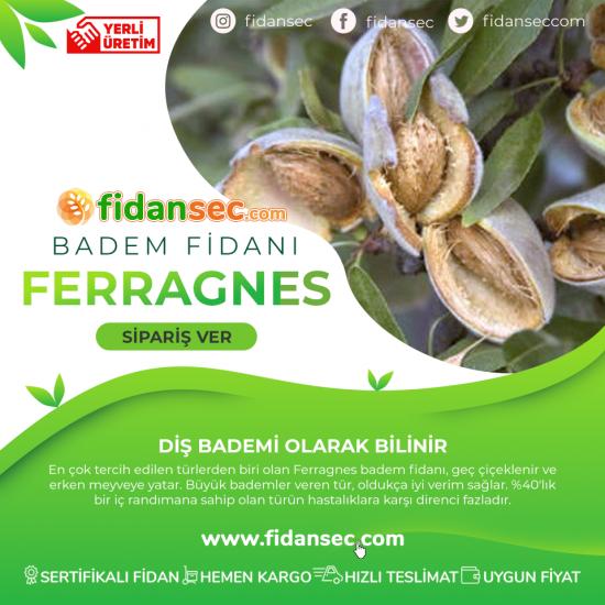 100 Adet Ferragnes 10 Adet Ferraduel Tozlayıcılı Badem Fidanı Paketi