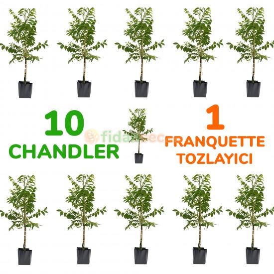 10 Adet Chandler Ceviz Fidanı 1 Adet Tozlayıcı Franquette  (AÇIK KÖKLÜ)