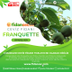 Franquette Ceviz Fidanı Açık Köklü 100 CM ve Üzeri (CHANDLER TOZLAYICISI)